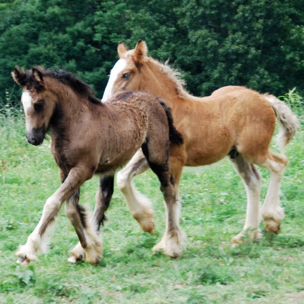 """the quarter horse colts poem In the poem """"the quarter horse colts,"""" the author uses two main poetic devices, imagery and simile, in order to convey her joyful, positive."""