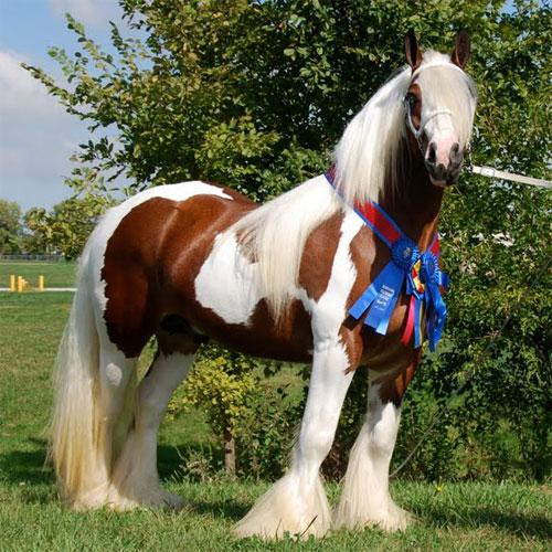 list of horses grand national