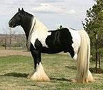 the-lottery-horse-tn